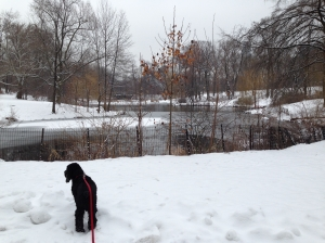 Dog in the snow in Central Park